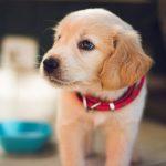 Aká strava je pre vášho psa nebezpečná?